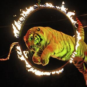 Цирки Пышмы