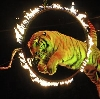 Цирки в Пышме